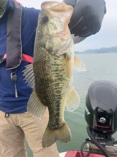 6月2日琵琶湖ガイドは昨日と今日で50cm含む50アップ4本でも日ムラが激しい琵琶湖